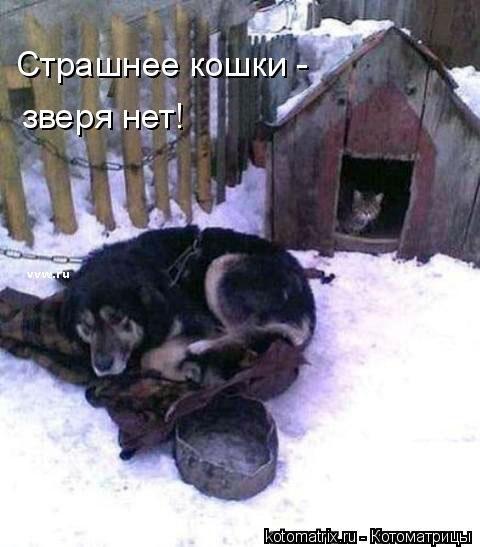 http://gbutler.ru/forum/download/file.php?id=16643&t=1&sid=a3cef8d70a255132352470b00cc4b1f9
