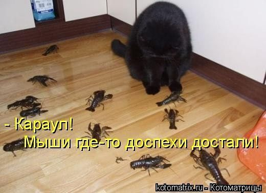 http://gbutler.ru/forum/download/file.php?id=17364&t=1